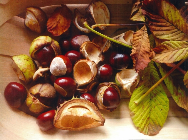 full chestnut 640x478